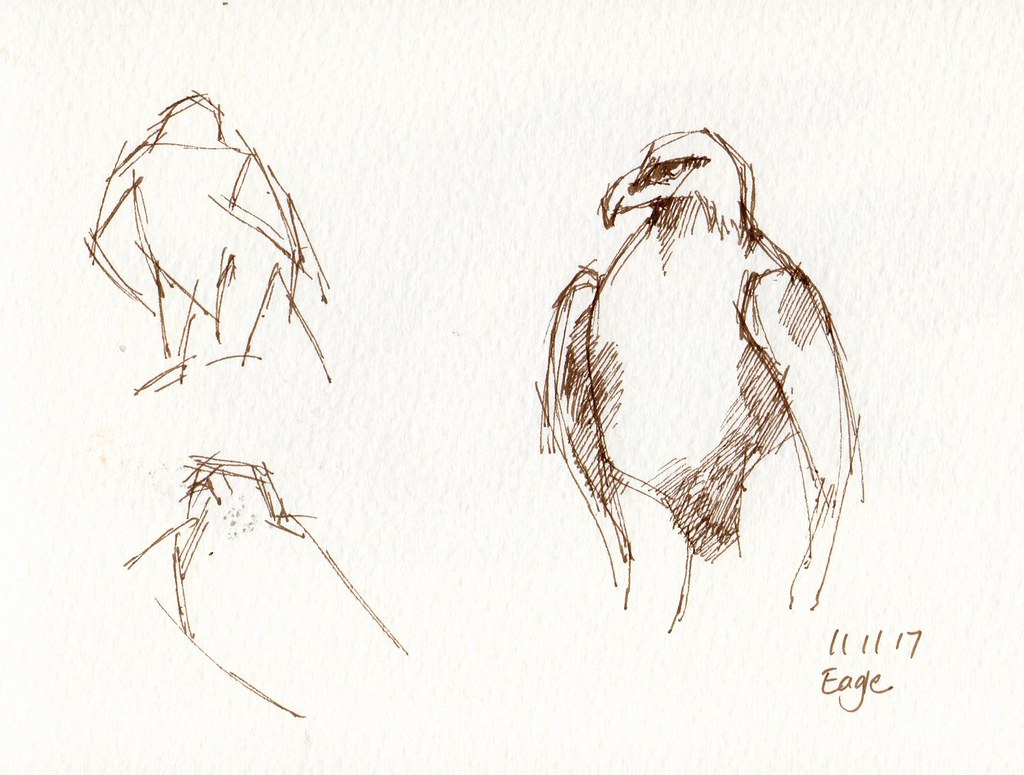 Birds sketches by calliartist birds sketches by calliartist