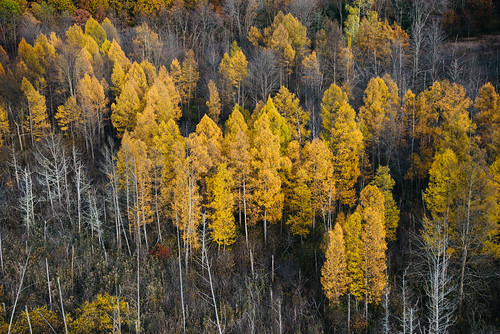 blue fromabove trees fall autumn michigan westmichigan kalamazoo portage texascorners landscapes woods