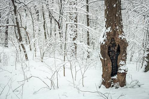 winter snow   by trevorrichardsmusic