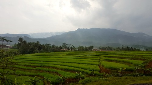 padi rice terrace java indonesia train travel journey countryside landscape tropical