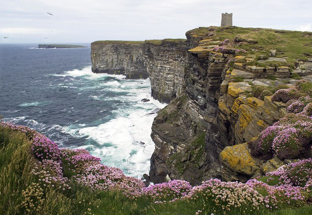 Marwick Head and Birsay Island, Orkney, with flowering thrift and Kitchener Memorial