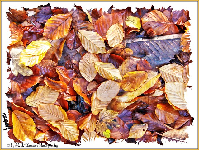 Autumn Foliage 15