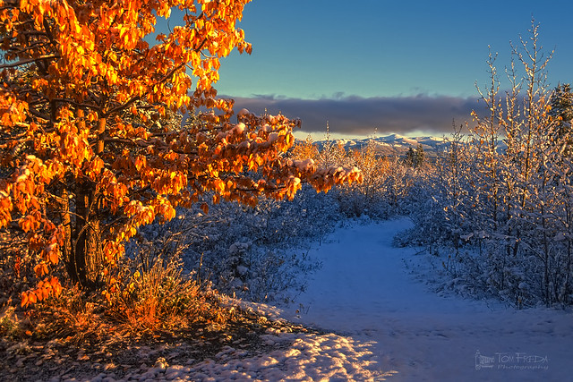 Autumn snow in Kluane