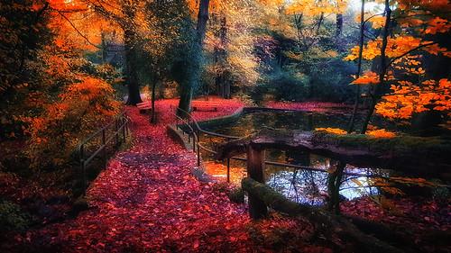 autumn forest colorful nature leafes pond bridge romanticplace daydream refrection landscape park trees duisburg stadtwald neudorf
