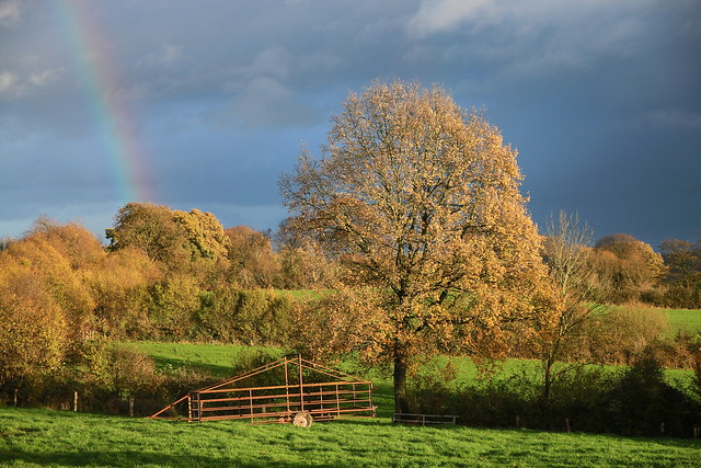 rainbow over trees of gold - our meadow today