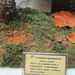 Fungi exhibition in the Biological State Museum of K.A. Timiryazev