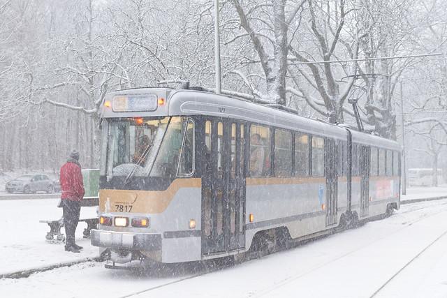 Sous les arbres enneigés, les clignotants oranges du tram signalent sa détresse.