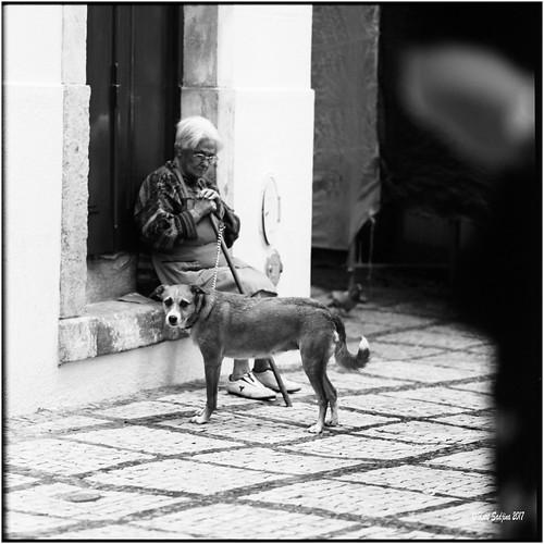 6x6 carlzeisssonnar150mmf14 coimbra fujiacros100 hasselblad500cm nikonsupercoolscan9000ed october2017 portugal rodinal analog blackwhite dog film scan