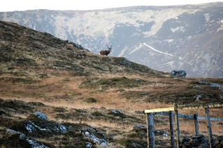 004 Stags of Glen Muick | by rfidhxjn58