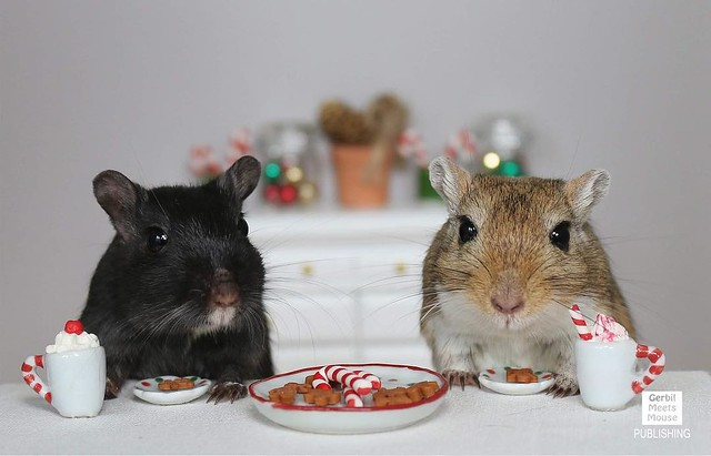 Our favorite winter activity is coming back inside! - Mocha and Petri #gerbil #dollhouse #dollshouse #doll #miniature #miniatures #hotchocolate #winter #christmas #tistheseason #canadian #canadianart #canadianphotography #petphotography #hamster #rodent #