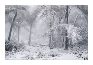 Winter Wonderland - in explore | by Dave Fieldhouse Photography
