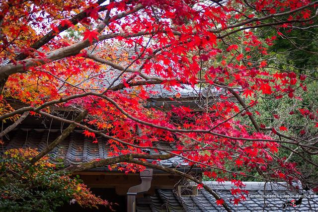 Shojiji Tempel, Kyoto