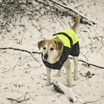 2015-01-24 um 14-56-45 - Hund im Winter