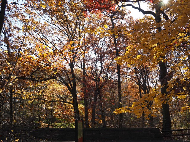 土, 2017-11-25 11:55 - New York Botanical Garden