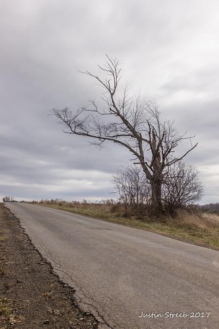 Wellsville Tree