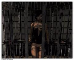 Bird Cage.....