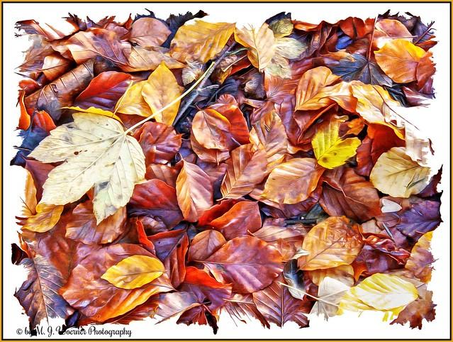 Autumn Foliage 13