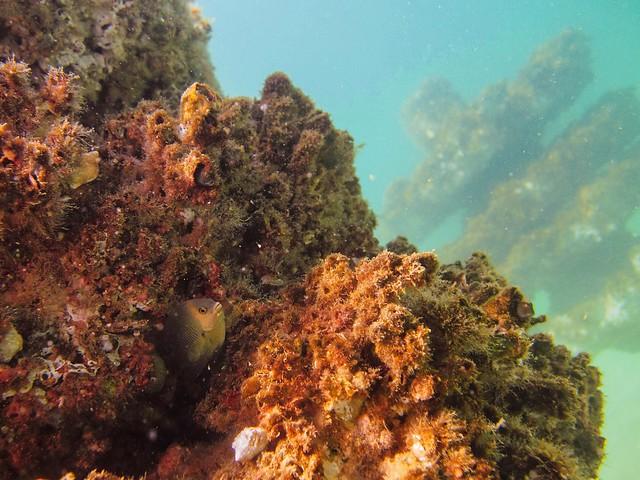 Grayton Beach Reef Module Living