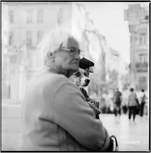 2017 6x6 carlzeisssonnar150mmf14 coimbra fujiacros100 hasselblad500cm nikonsupercoolscan9000ed oktober portugal silverfast analog blackwhite dog film street