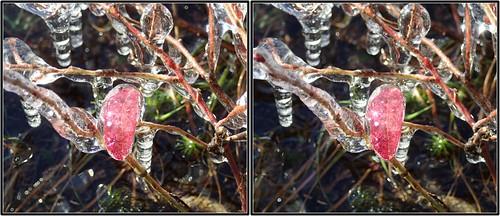 bushes crosseye ice leaf stereo tremblant