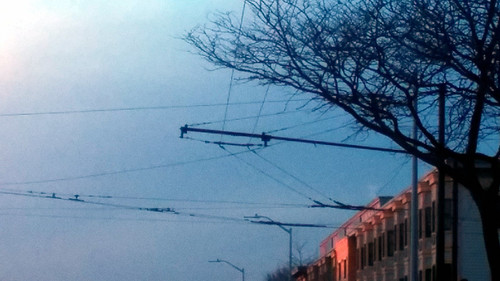 tree city cables sunset crepuscular blue grainy buildings streetlights abstract utilitylines sky street urban light texture geometry