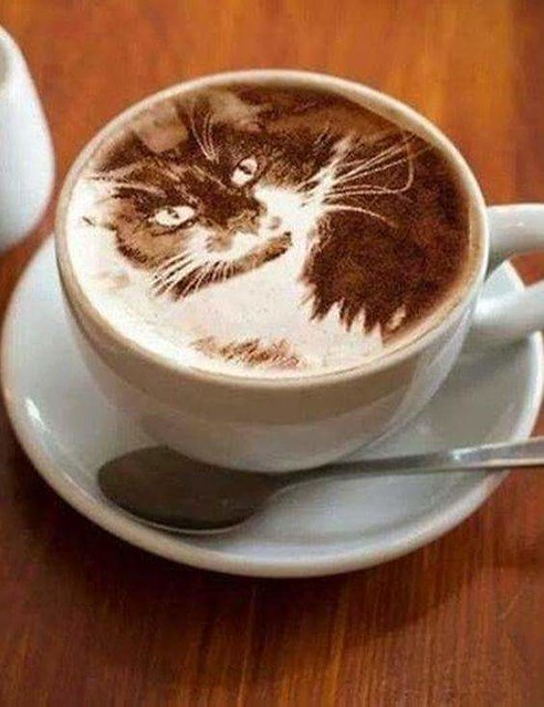 Pics Cats Coffee