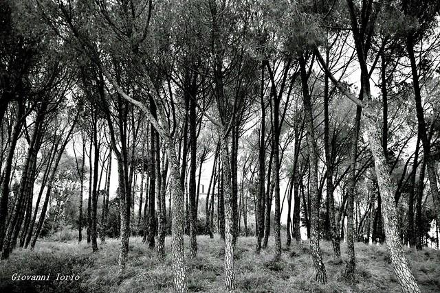 Natura in black