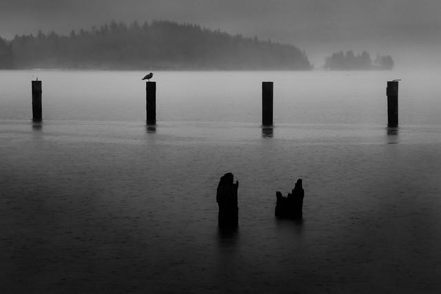 Six pilings on Henderson Bay