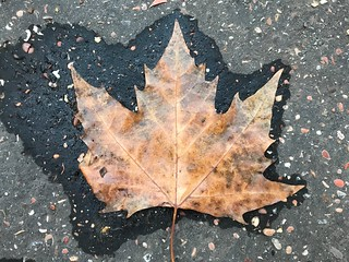 Leaf   by Massimo6342