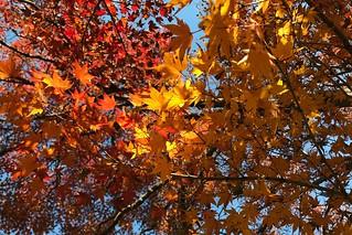 紅葉   by lulun & kame