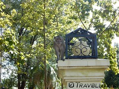 Monkey in the Governor's Park, Kampong Chhnang