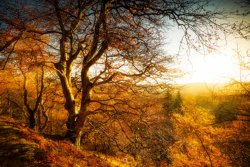 woodland longexposure perthshire landscape leefilters scotland nature autumn trees sunshine countryside canon leaves forest light bridgeofearn unitedkingdom gb