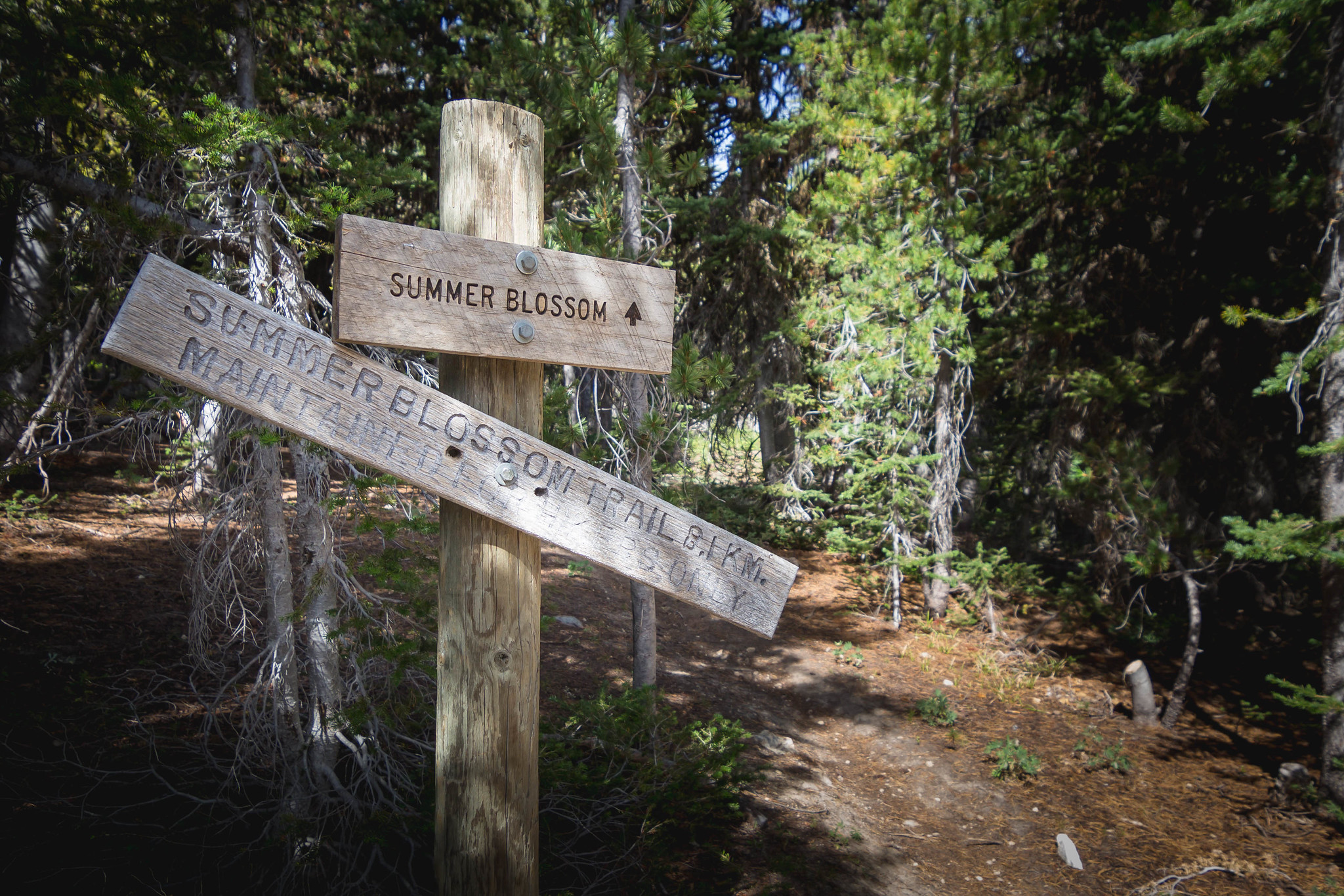 Summer Bloom Trailhead