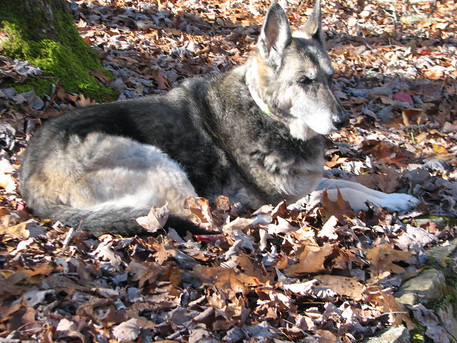 GSD, 14 years old