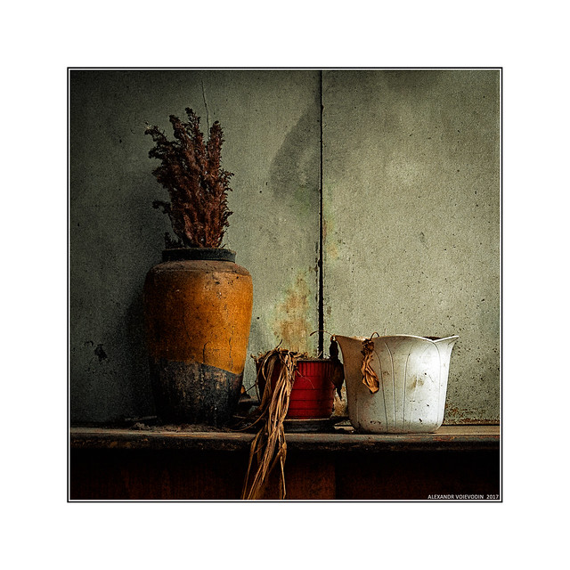 Abandoned flowers (casual still life)