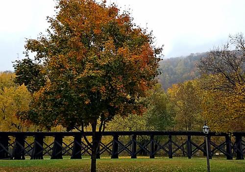 harpersferry westvirginia harpersferrynationalhistoricalpark photo digital autumn fall rain tree oak cropped