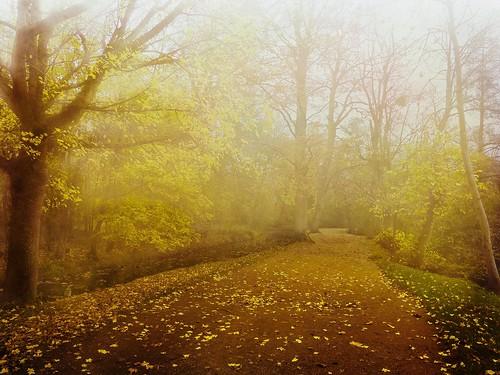 nature landscape trees mist autumn misty