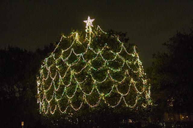 Christmas lights_49