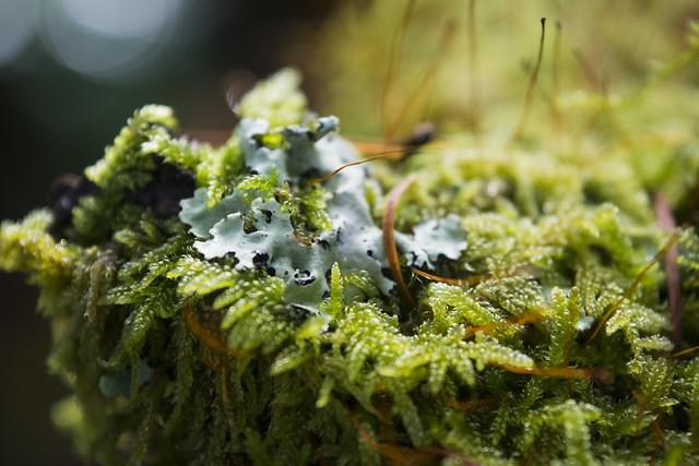 Lichen on Moss