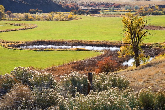 Meandering Autumn River