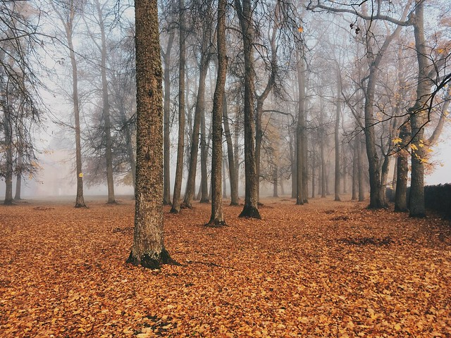 Manors parc in Latvia. Golden fall and foggy mood.
