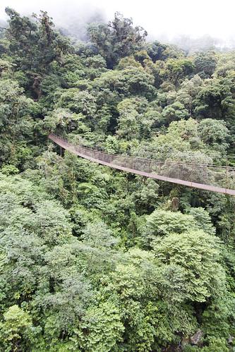 boquete ropebridge bridge hangingbridge treetrek trees riocristal