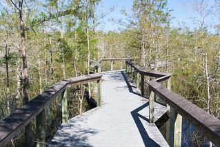 Everglades National Park, Nov. 25, 2017   by JenniferHuber