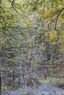 Woodland Colour.