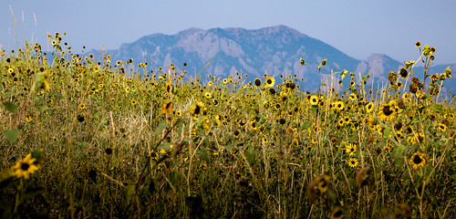 flowers and flatirons | by Christian Collins