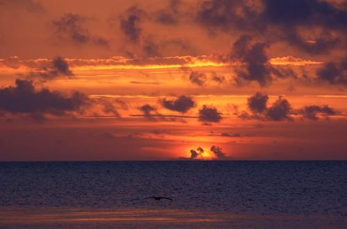 sunrise florida 12817 southflorida morning unitedstates usa keywestflorida warm eastside smathersbeach atlanticocean beach sunriseinparadise sky sea water coastalglow pelican skimthesurface nature beauty natural colorful calm peaceful sunrays5