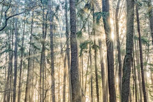 sunshine december natural sunrise sigma nature western canon pines light rays sun sigma35mmart park canon7dmkii golden pennsylvania pa fog trees landscape county foggy