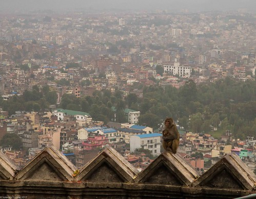 in Kathmandu_07 monkies and the city | by Valentin Groza