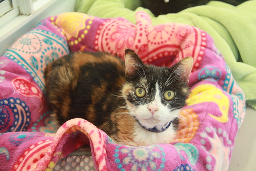 Daisy - 16 year old spayed female | by carescatshelter