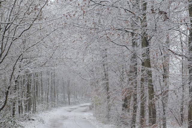 Deux traces de pneus, il y a donc bien eu des courageux par affronter à vélo la tempête de neige.